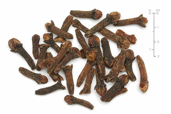 Dried Cloves Used in Expelling Intestinal Worms