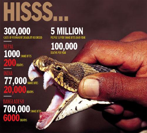 Viper Bites